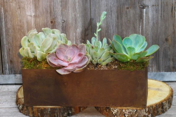 Rustic succulent garden is a great way to say thank you.