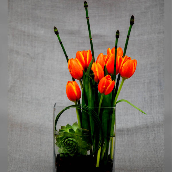 Tulips and succulent accent in clear vase, a beautiful way to say thank you.