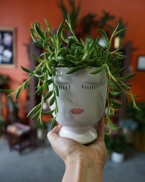 Succulent plant novelty pot