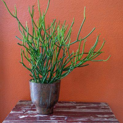 Send a pencil cactus as a thank you.