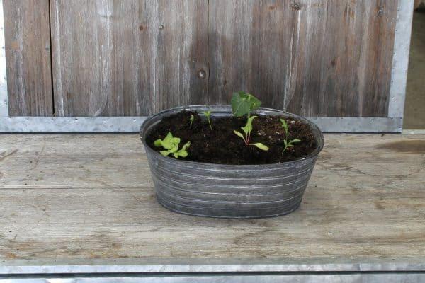 Gaia Seed starter kit