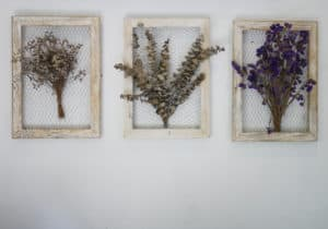 Photo of dried flowers in frames as a creative use for dried flowers.