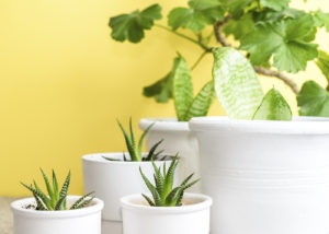 Easy to care for indoor plants feature image.