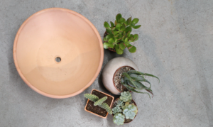 Succulent plants next to an empty pot.