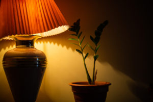 Plants For Low Light Homes – Inspiration & Care Tips
