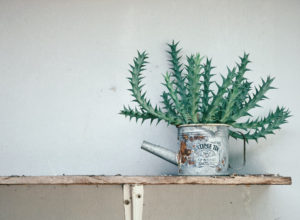 Succulent plants in a tin can on a shelf.