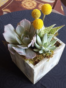Succulent plants in a wooden box.