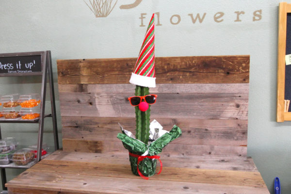 Dressed up Christmas plant, Euphorbia ingens.