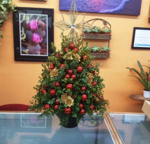 Table top Christmas plant Christmas tree.