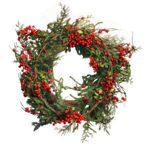Holly wreath Christmas plant.