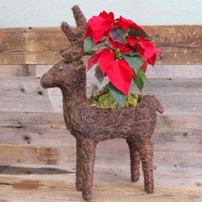 Reindeer poinsettia holder