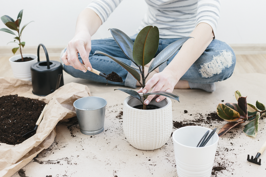 Woman's hands transplanting plant into a new pot.