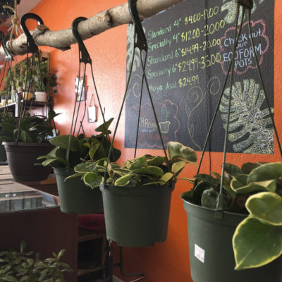 Hanging plants at store front counter.