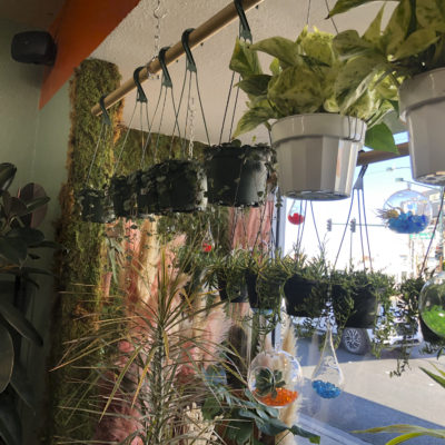 Hanging plants in plant store front window.