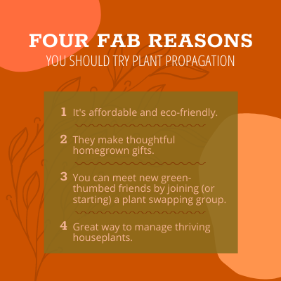Four fab reasons you should try plant propagation