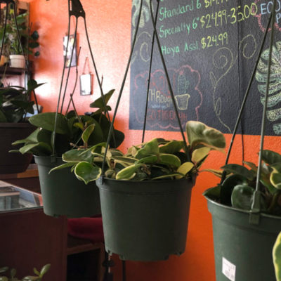 Houseplant propagation: The beginner's guide to propagating plants